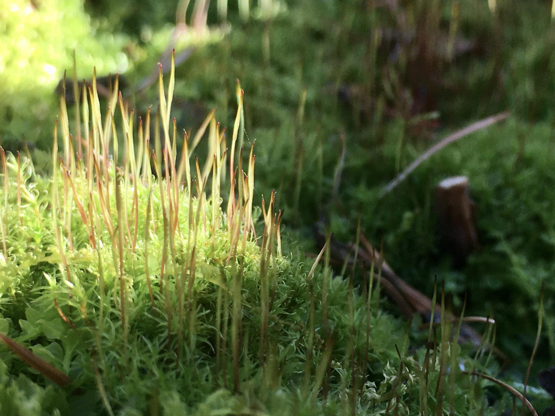 軽井沢の苔の森
