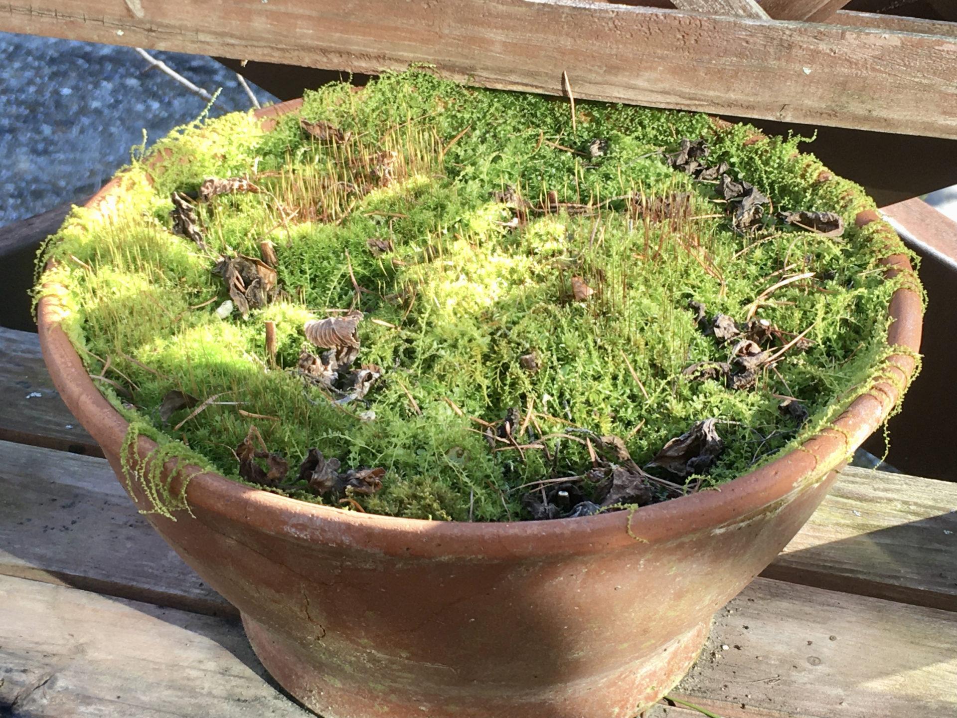軽井沢の苔の森(植木鉢)