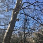 野鳥の餌カゴ