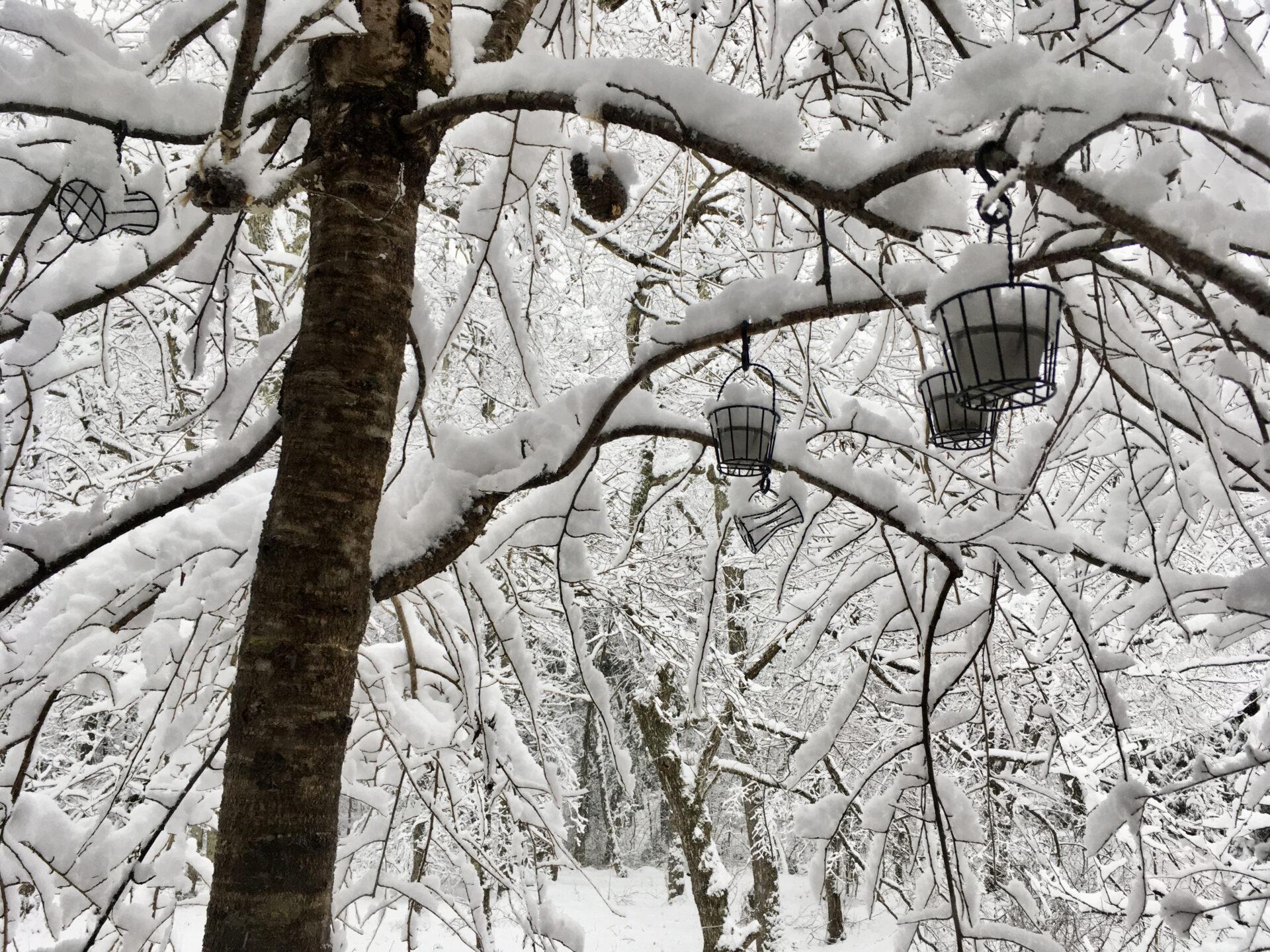 軽井沢の雪の餌かご