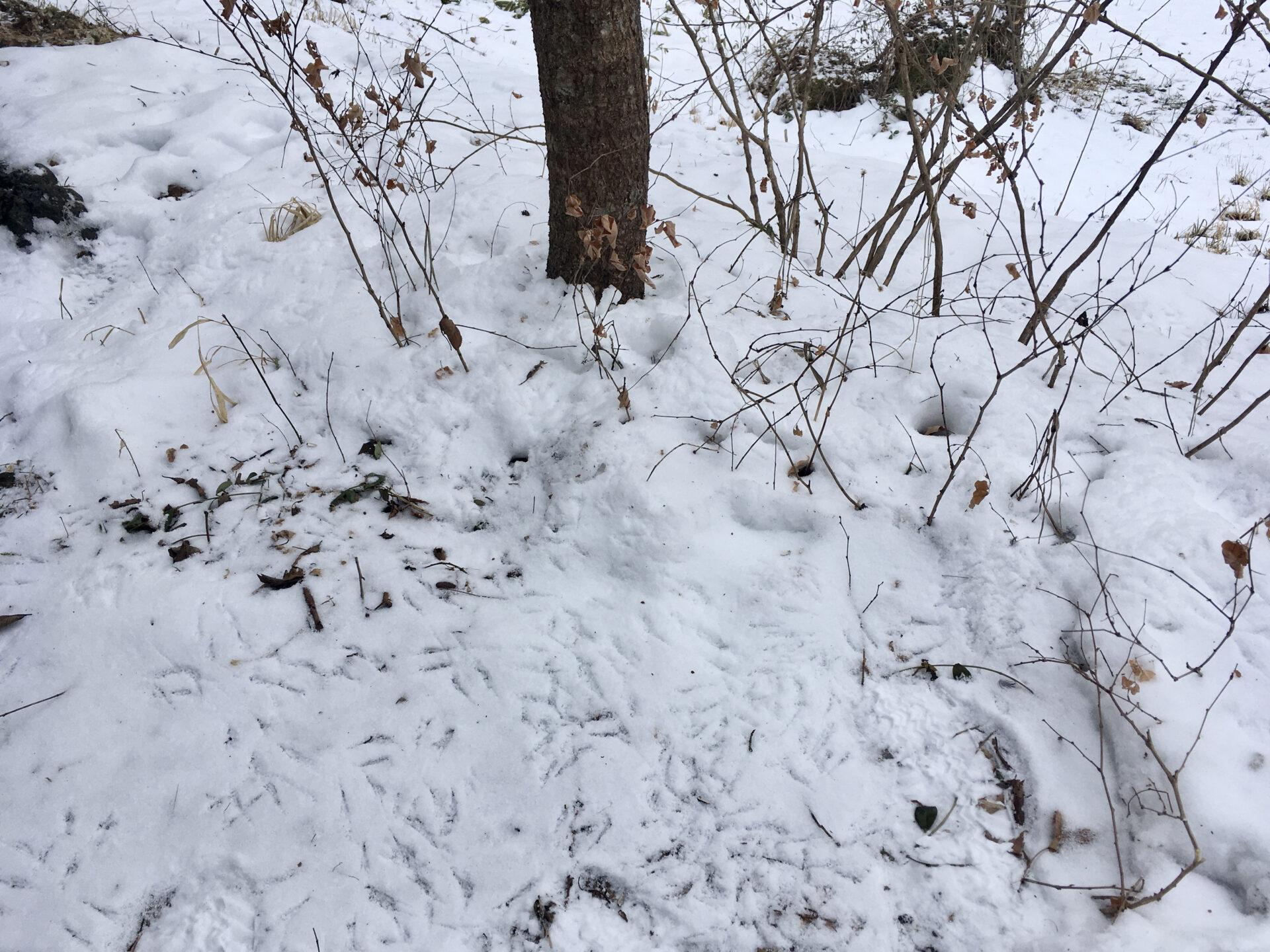 軽井沢の鳥の足跡